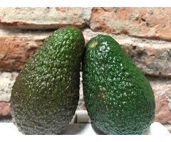 ECO AVOCADO 1 BUC