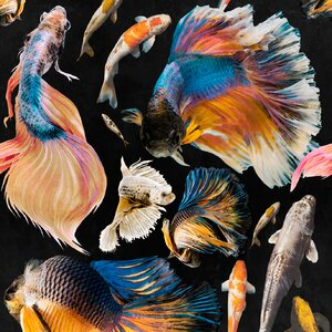 GoldFish Anthracite  Set 3 role tapet, Netesut, Multicolor