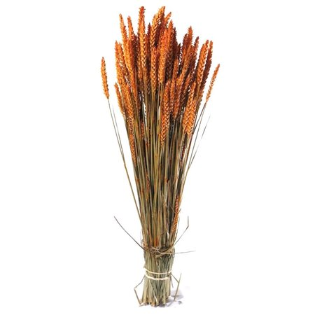 Spice grau portocalii vopsite