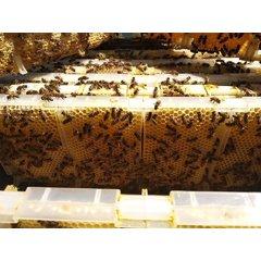 Set 4 rame miere in sectiuni asamblabile